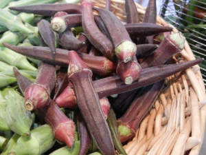 okra pods - the vegetable comes in both purple and green varieties